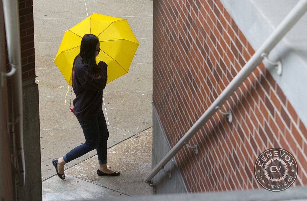 A  woman holds a bright yellow umbrella as she approaches  the University of Missouri's Thomas and Nell Lafferre Hall during a rainy day in Columbia, Mo.