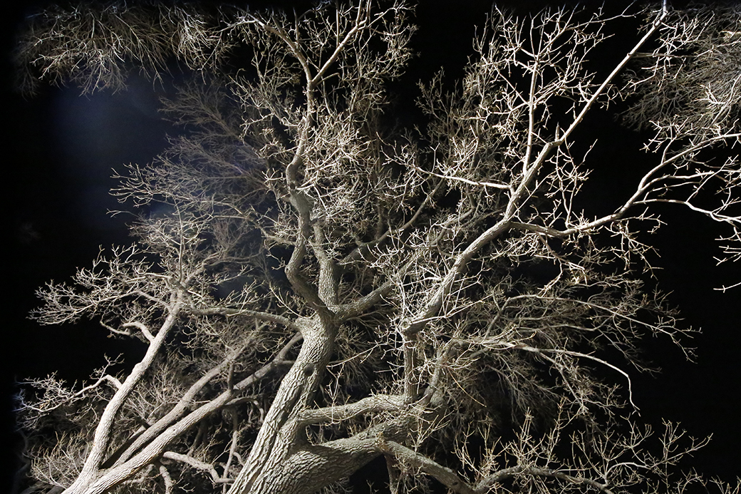 A light tower in the Denver Zoo's parking lot illuminates myriad tree branches on Jan. 2, 2016.